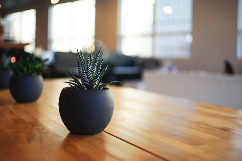 Succulent Plants Office Decor