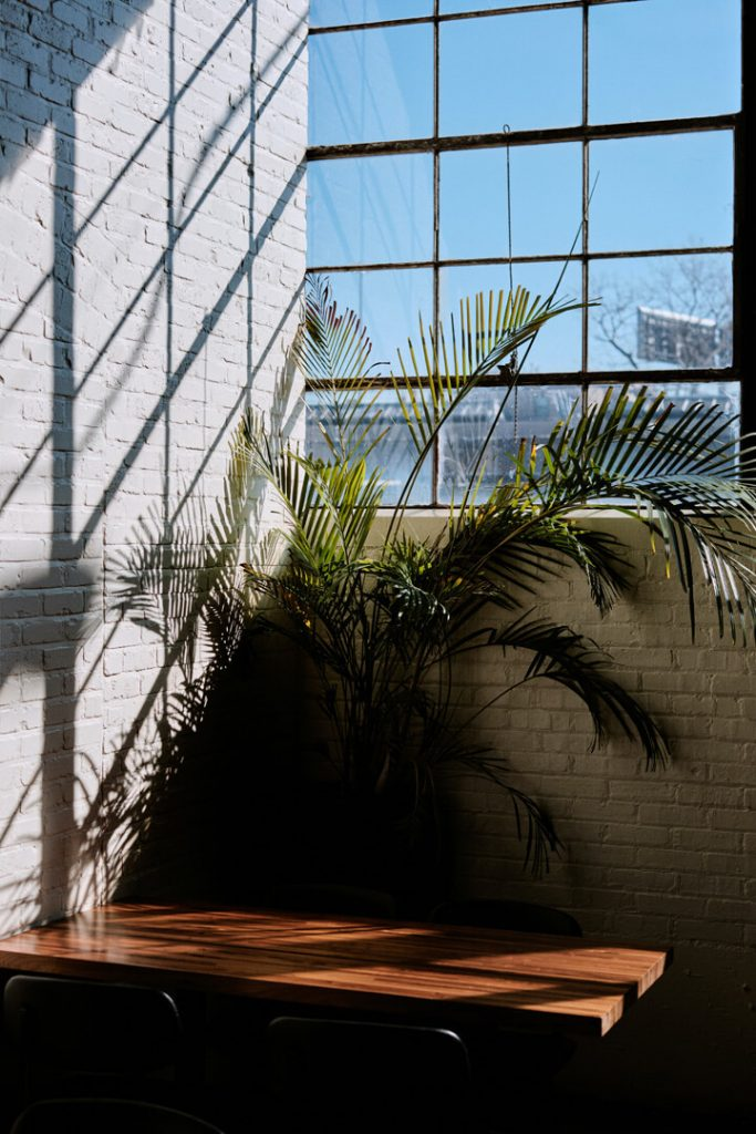 Luxury Office Space with Natural Light and Plants